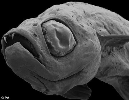 bizarre fish
