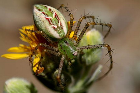 colorful and interesting spiders