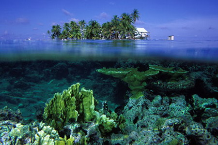 Beautiful coral reef around the world