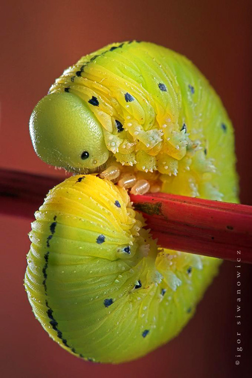 Beautiful Macro Insect Photo